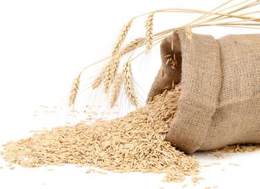 Le blé complet