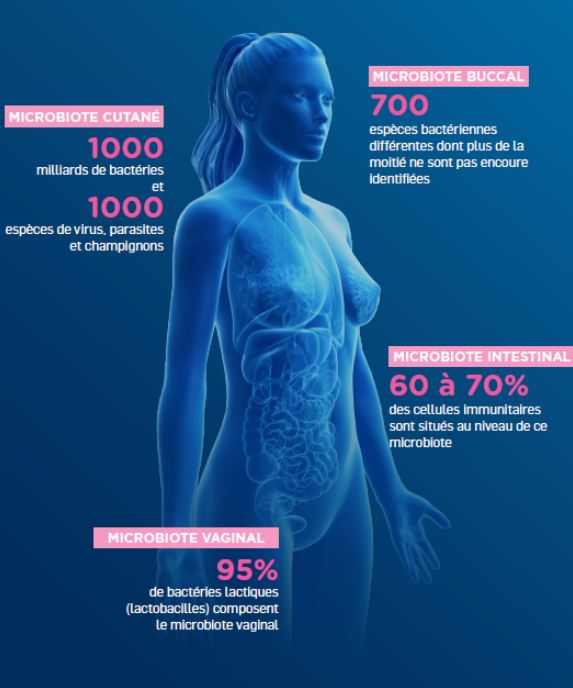infographie les microbiotes