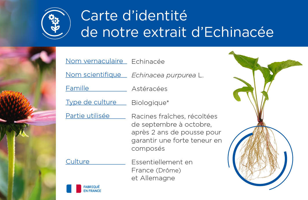 Phytostandard® du mois : l'échinacée