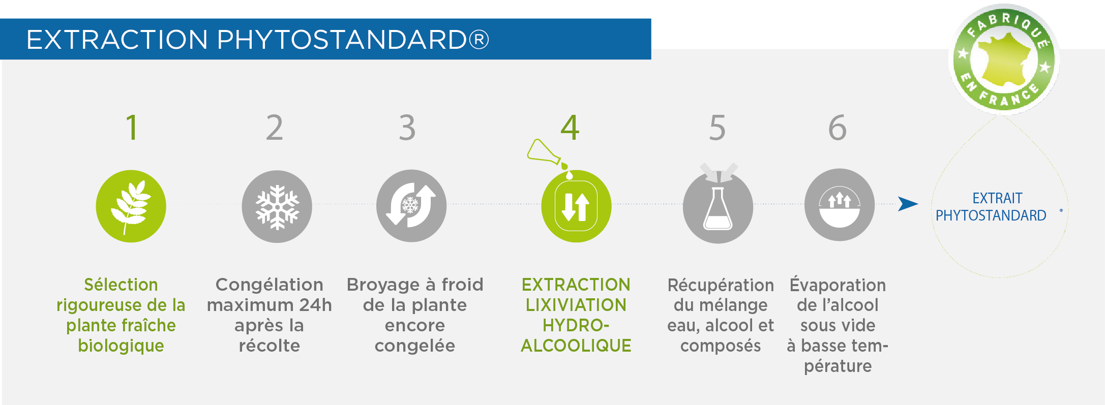 Solutions PiLeJe | Extraction Phytostandard®